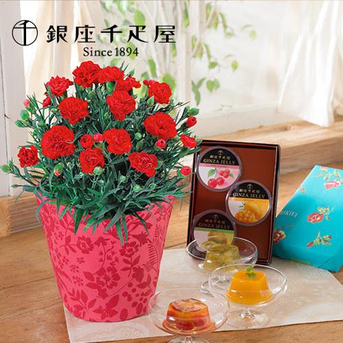 銀座千疋屋「銀座ゼリー」と母の日カーネーション鉢のセット