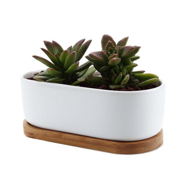 T4U 16.9 陶器鉢 白 楕円 植木鉢 多肉植物 サボテン鉢 竹トレイ付き